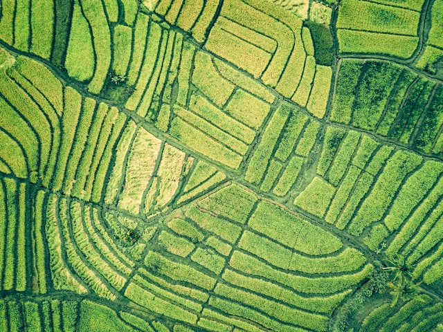 Aerial view of geometric green fields